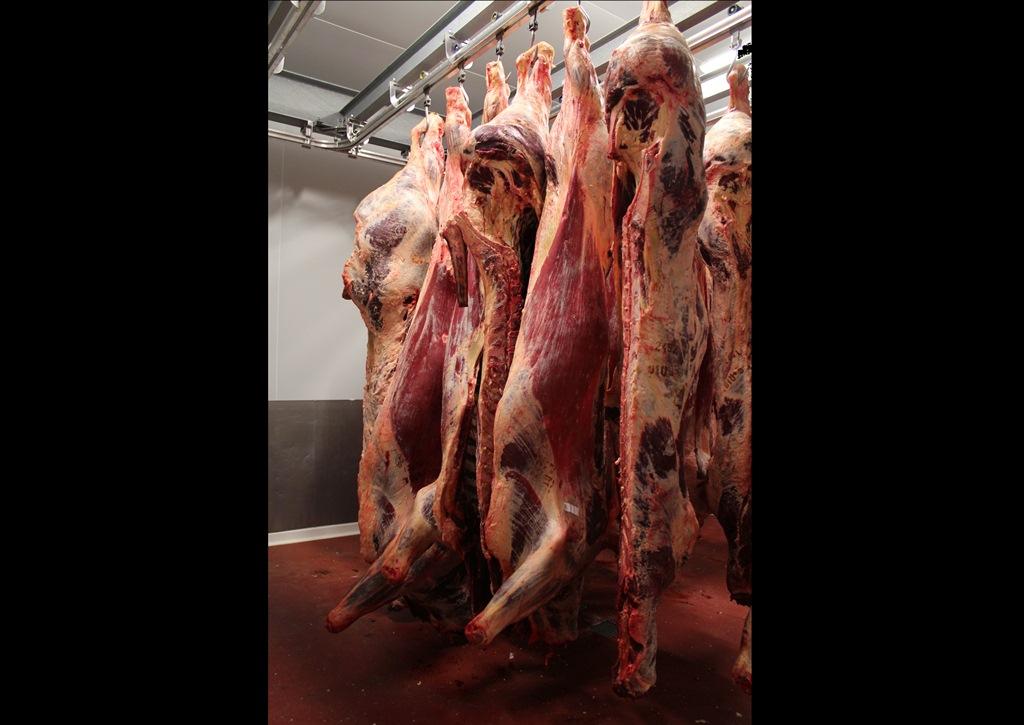 Carcasses bovin