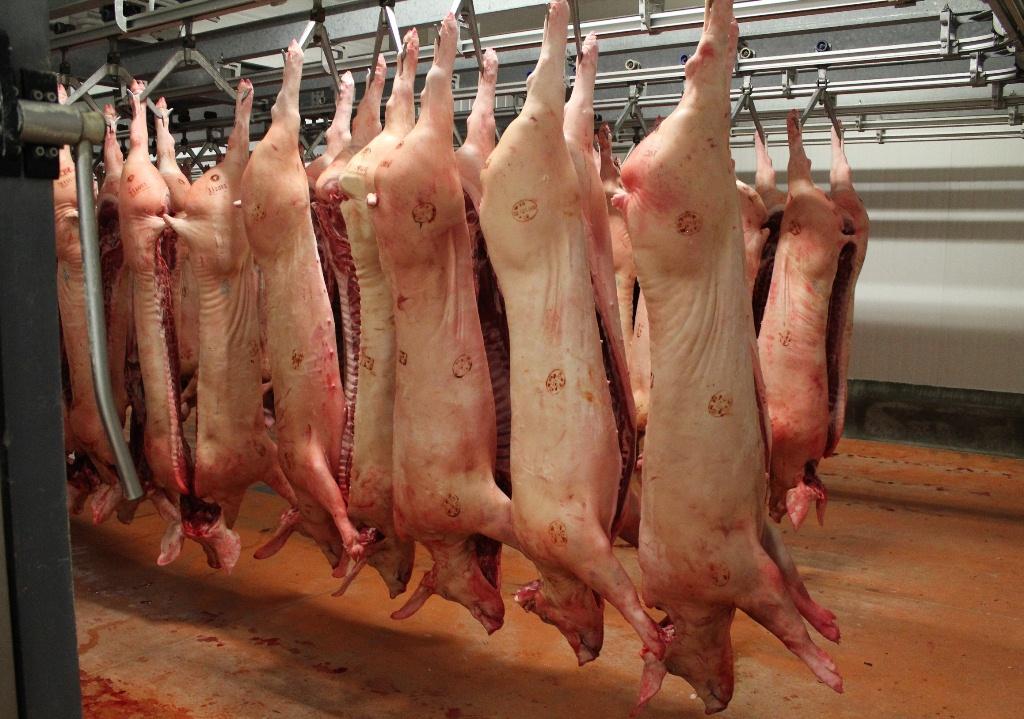 Carcasses porc